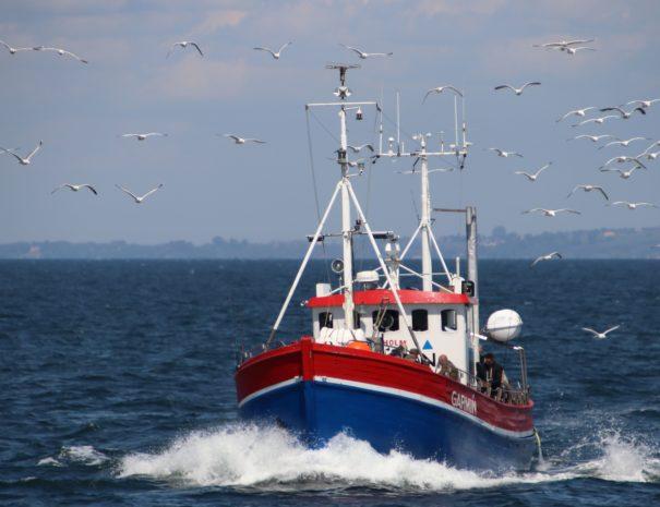 Lej et skib på Øresund